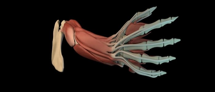 what-are-different-types-of-medical-animation-banner-image