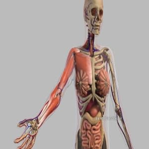 what-are-different-types-of-medical-animation-thumbnail