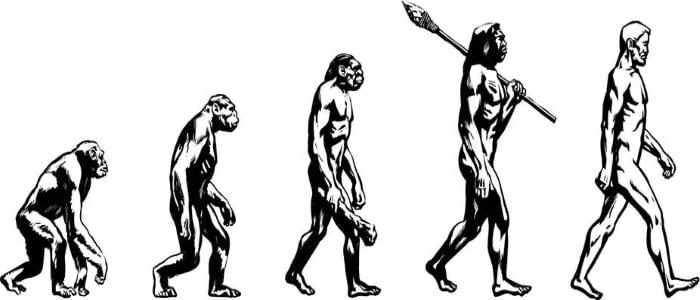Darwins-theory-of-evolution-diagram